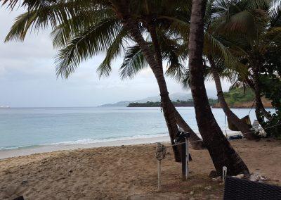 2016 - Palm Trees Beach