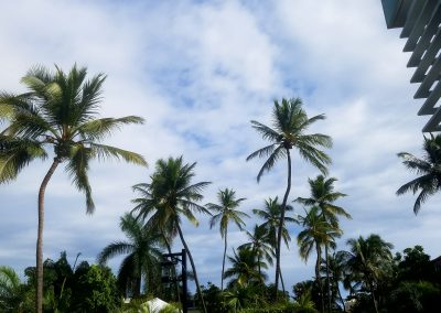 2016 - Palm Trees - Dec.